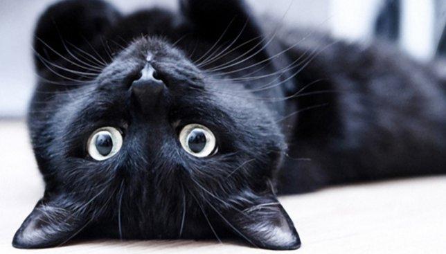 Кот, который решил, что он змея, покорил сердца интернет-пользователей