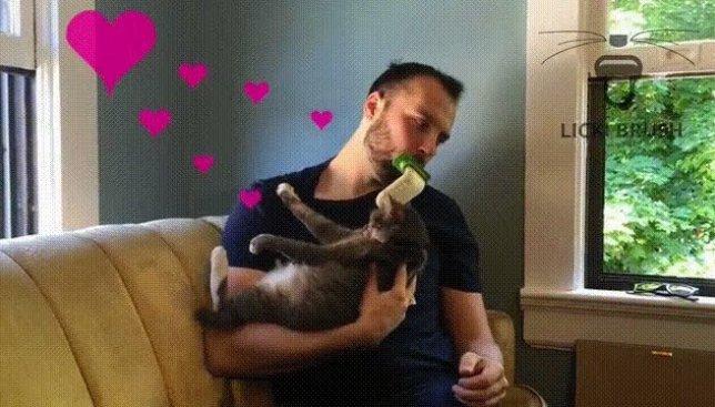 Коты в восторге: каким необычным способом хозяева проявляют свою любовь (Видео)