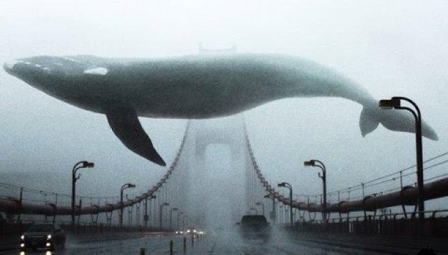 Специально ко дню кита: видео о 10 самых больших вещах в мире