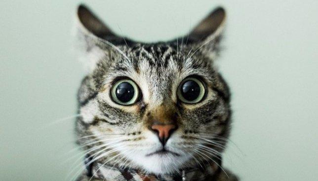 Коты не бесполезны: для какой полезной цели может служить кот