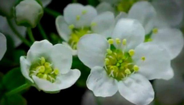 Чудеса вокруг нас: красота природы, которую не увидишь невооруженным глазом