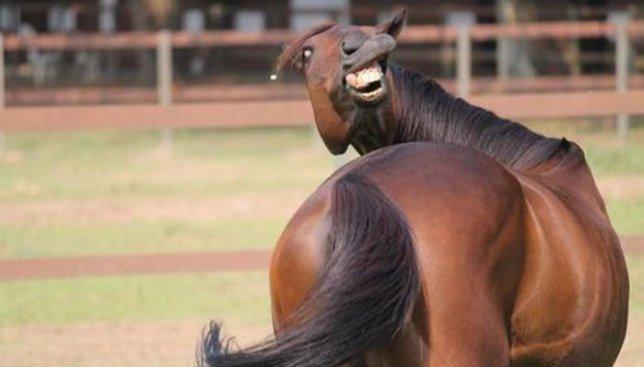 Специально ко дню танго: видео, как мужчина танцует с лошадью