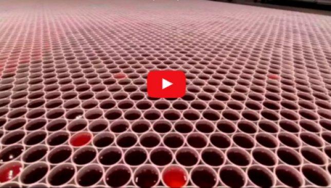 66 тысяч стаканчиков с дождевой водой превратились в невероятный рисунок