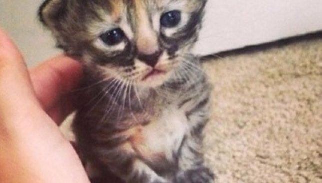 Сегодня Всемирный день кошек: особенные коты также заслуживают внимания